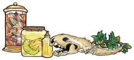 Bill Buczinsky's poetic graphic of science lab artifacts.  An animal skull and jars filled with experiments